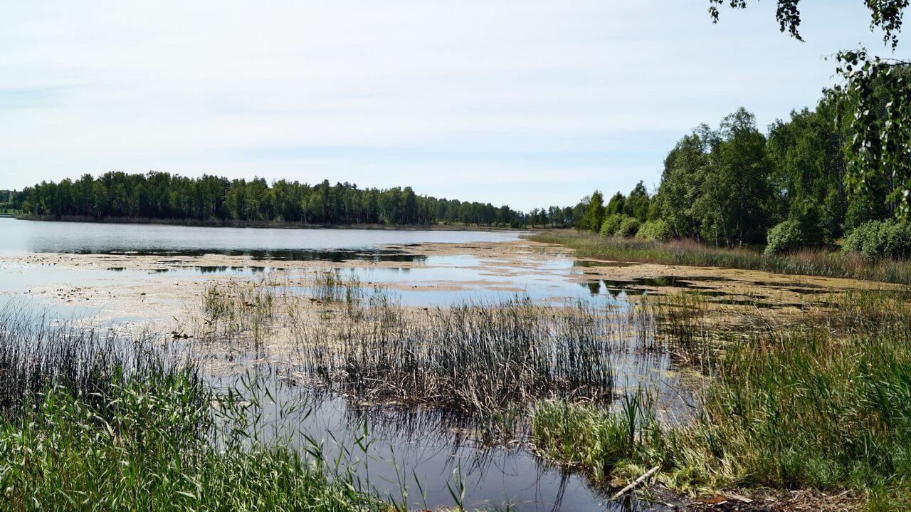 озеро Карагайкуль (Ворожеич)