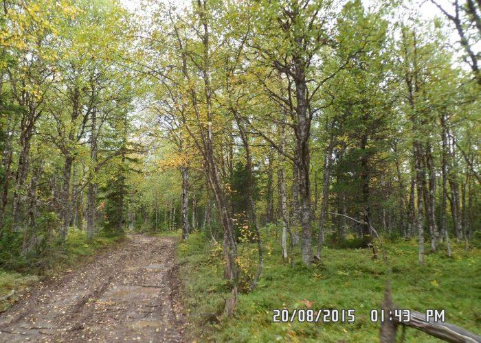 Чирканурский лес