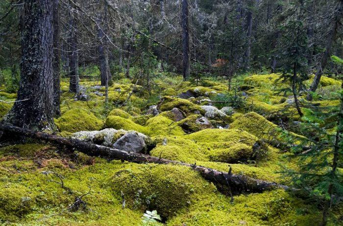 Южно-Уральский государственный природный заповедник