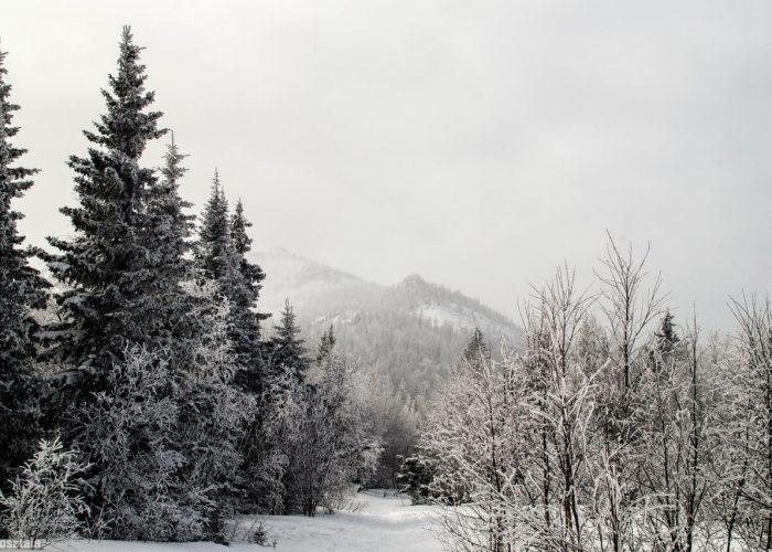 Южный Урал, Зима, Зюраткуль, Челябинская область, Башкирия, Хребет Большая Сука