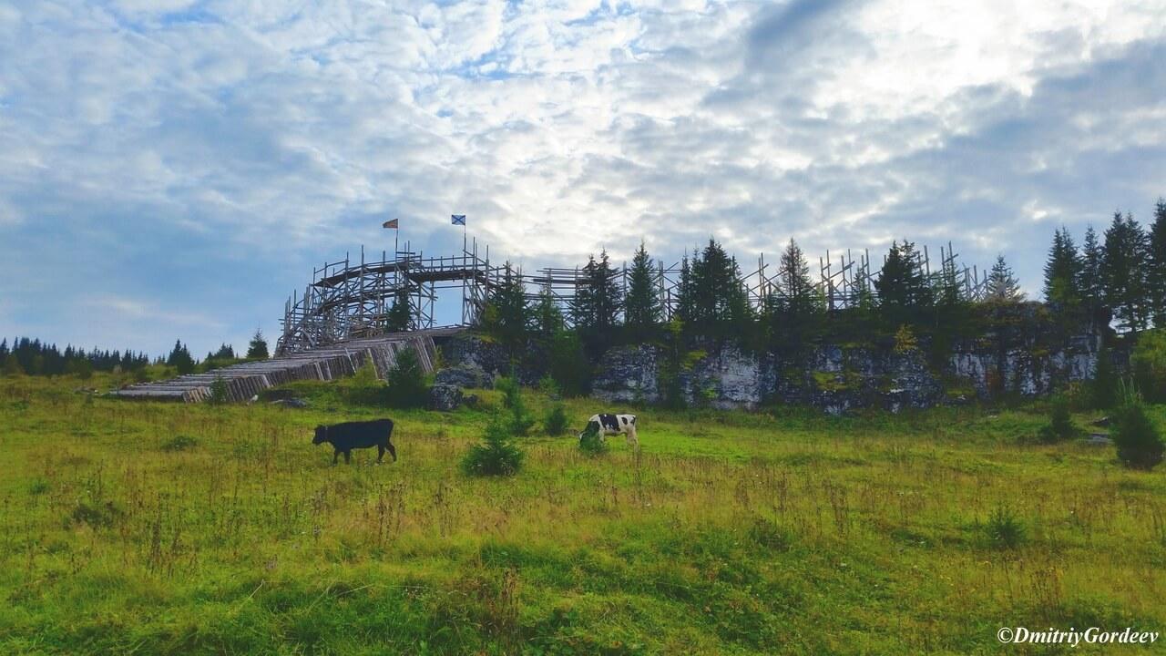 Коровы на фоне крепости п. Усьва