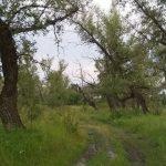 Экологическая тропа «Тополиная роща»
