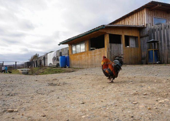 Оленья ферма, Висим, Свердловская область