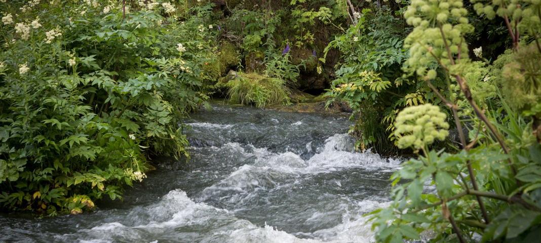 Урочище Вынырок, река Кумыш