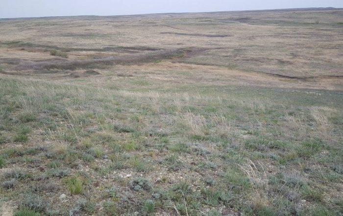 Заповедник «Оренбургский»: участок «Предуральская степь»